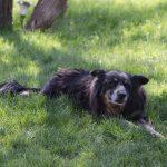 bwr-mora-idyll-dog_011