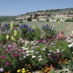 bwr-mora-idyll-flowers_012