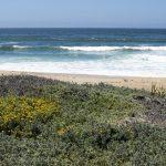bwr-moss-landing-beach