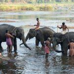 bwr-south-india-elephant-bath-time
