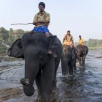 bwr-south-india-elephant-riders