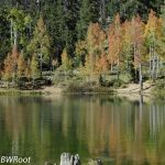 bwr-southern-utah-lake-forest