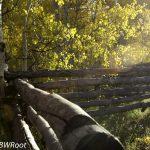 bwr-southern-utah-landscape-trees-sun