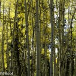 bwr-southern-utah-trees